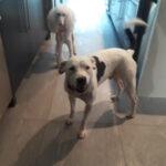 Doggie Walks Houston